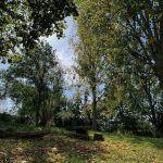 Picknick nature