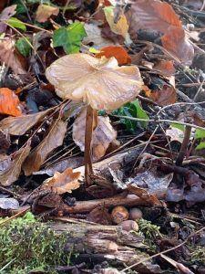 paddenstoel met blaadjes