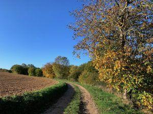 walnotenboom aan pad